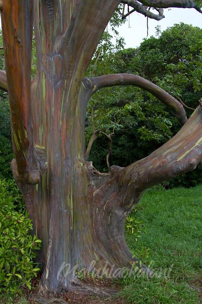 Escape on a Eucalyptus
