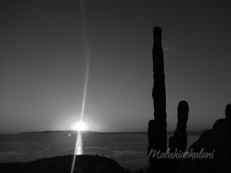 Cactus Calm