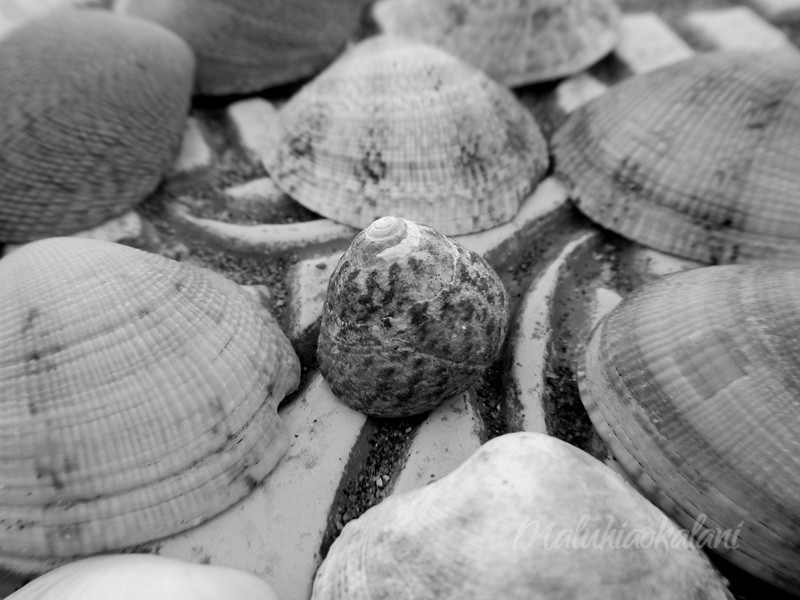 Snails in Charge