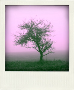 Polaroid - natur