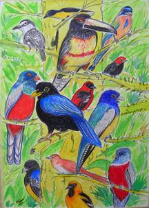 Birds of the Yucatan 1 - 9x12, color pencil, watercolor, pen,  aug 6, 2014 CIMG0173ss