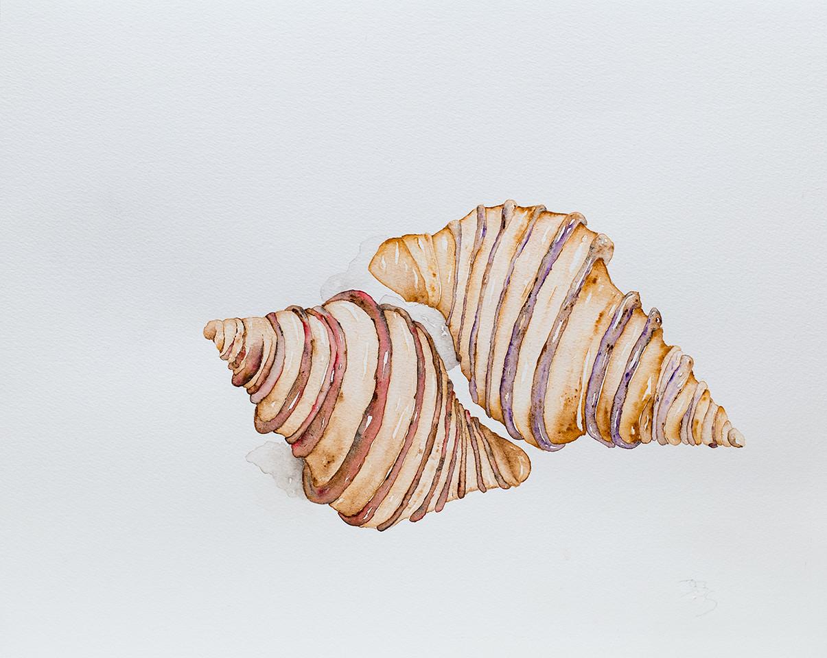 Cuddling Shells     $75