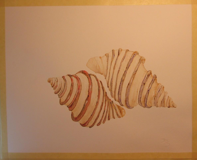 Cuddling Shells still a work-in-progress!