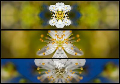 "Day 69 - Triplum ~ Photographic mirrored triptych, 22""x16"""