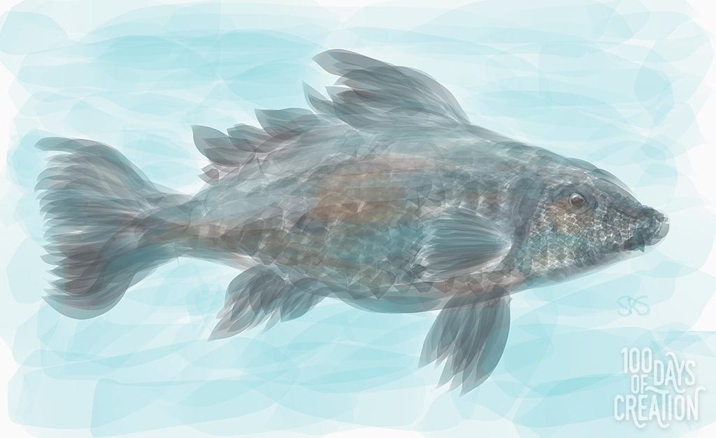 Day 2 - fish