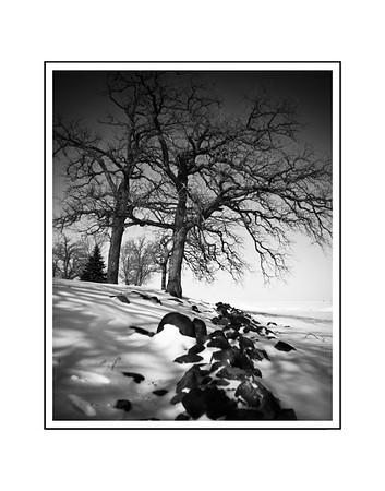 Oshkosh Trees by the Lake 2018 edit 11x14