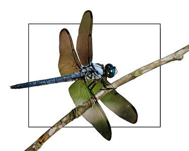 Dragonfly 2018 edit 3  16x20