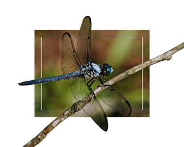 Dragonfly 2018 edit 2 16x20