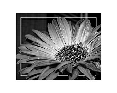 Summer black and whaite flower 16x20