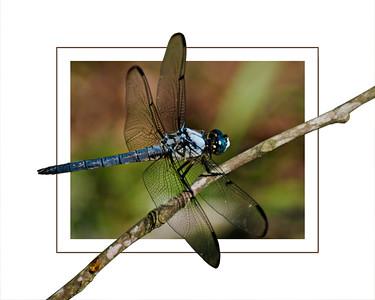 Dragonfly 2018 edit 1 16x20