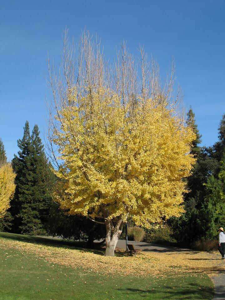UC Davis Arboretum, Davis, CA.  November 2006. Image Copyright 2006 by DJB.  All Rights Reserved.