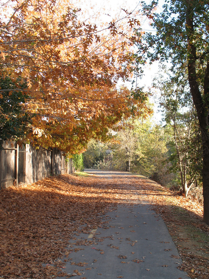 Willow Creek Trail, Folsom, CA.  November 2006. Image Copyright 2006 by DJB.  All Rights Reserved.