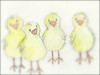 205. Hazy view of other chicks.
