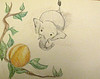 4. TEMBO STARED LONGINGLY AT THE MARULA FRUIT. THEY WERE HIS FAVORITE.