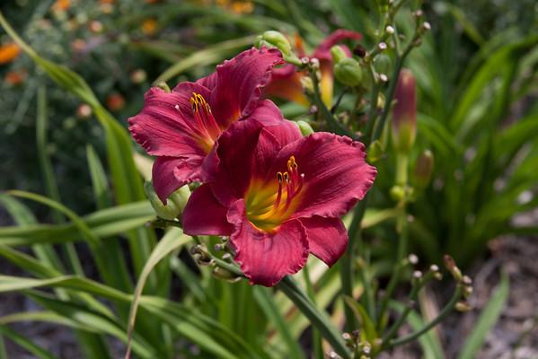 2011-08-24 Flower snaps