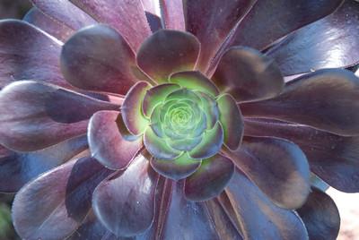2012-04-24 Huntington Gardens in Pasadena