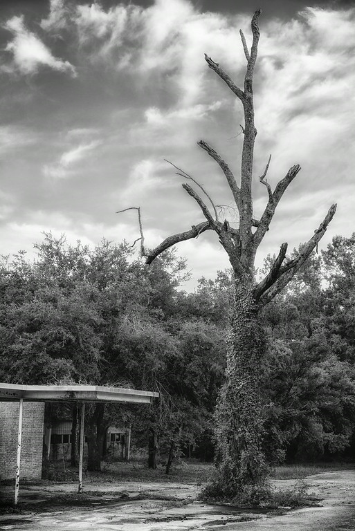 Tree of Eastover