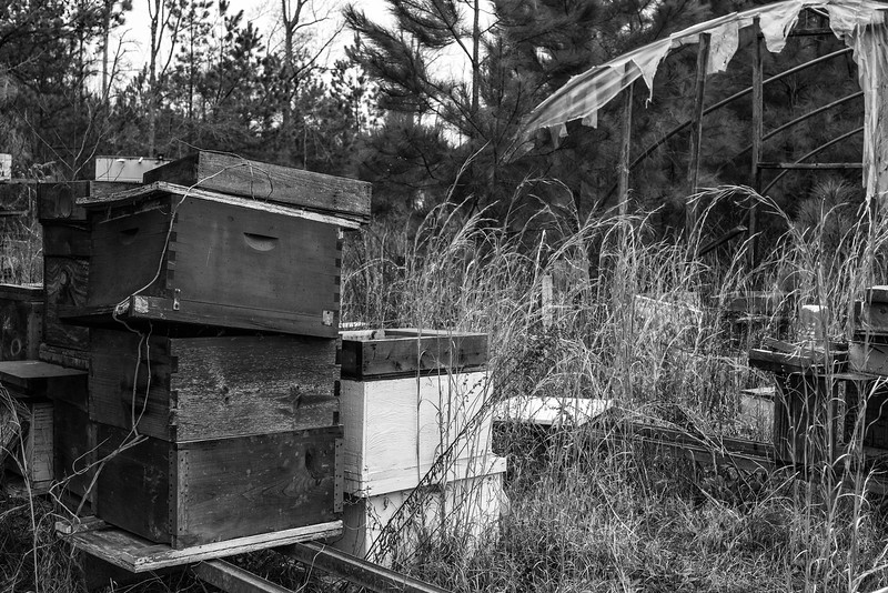 Greenhouse with Bee-Boxes