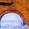Violin 323