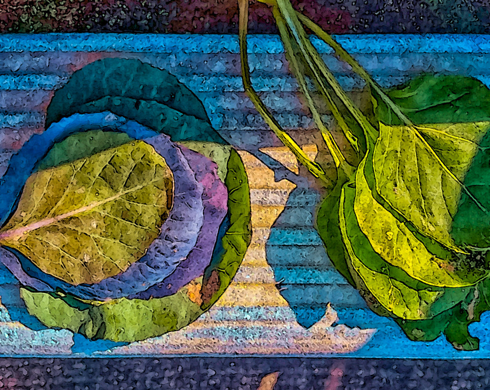 cabbage leaves more contrast serges 16x20 inches serge 96 ppi.jpg