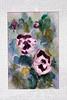 _0Z03469 Purple Pansies