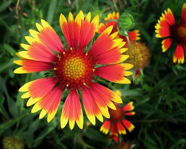 FlowerPrint-2_0616