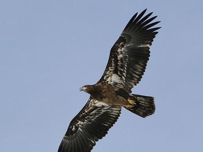 13-EaglePrint_0875