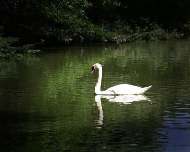 4-SwanPrint_0051