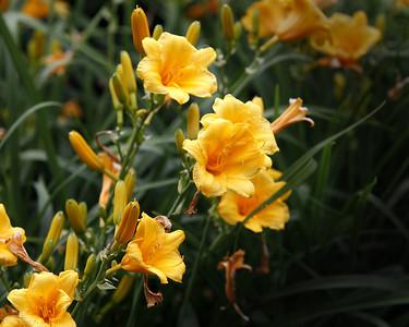 A-FlowerPrint5_3290