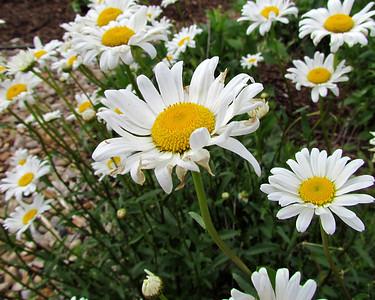 18-FlowerGardenPrint_0766