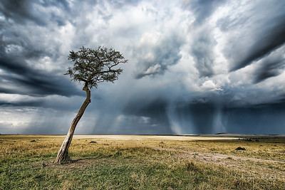 Rainstorm in the Masai Mara.