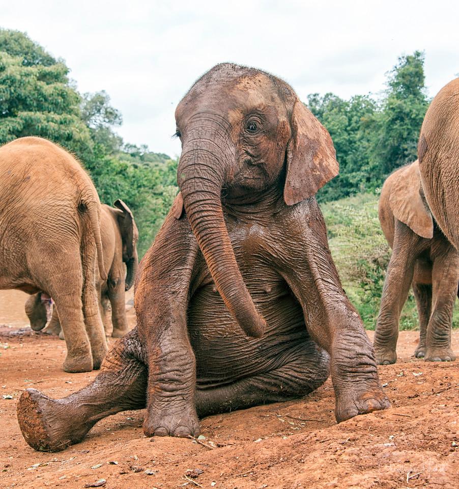 aug312013_nairobi_blixen_elephant_2352