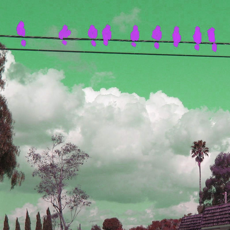Birds on a Wire - green and violet
