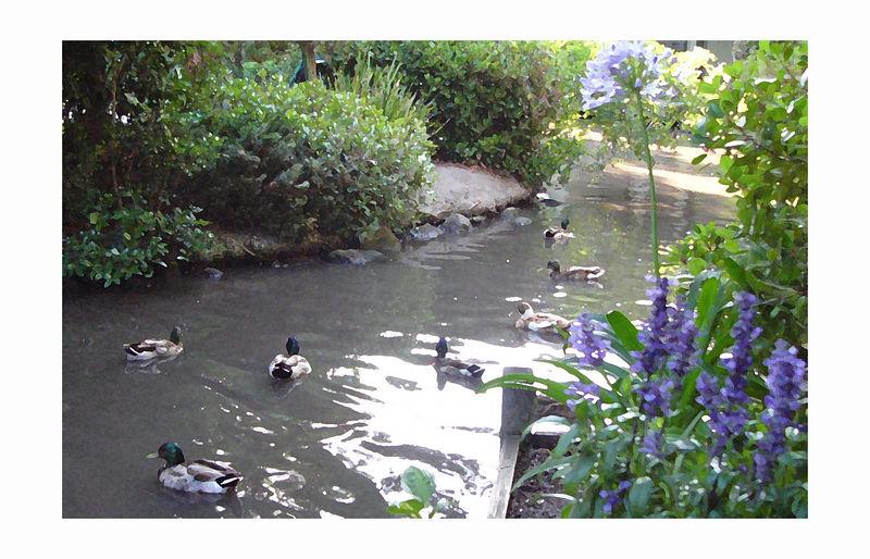 seven ducks - drybrushed