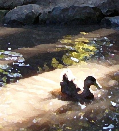 duck - drybrush