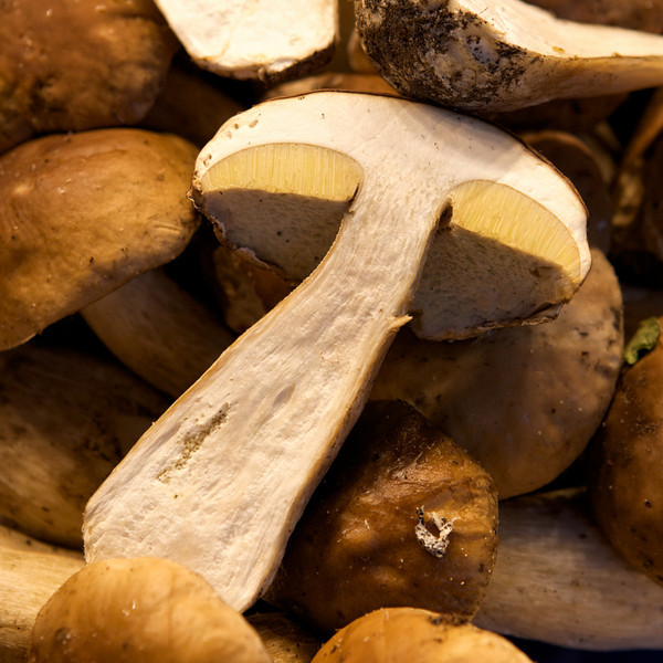 """T"" mushroom at an open air market"
