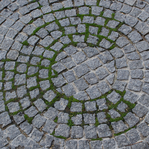 """C"" mossy cobblestone"