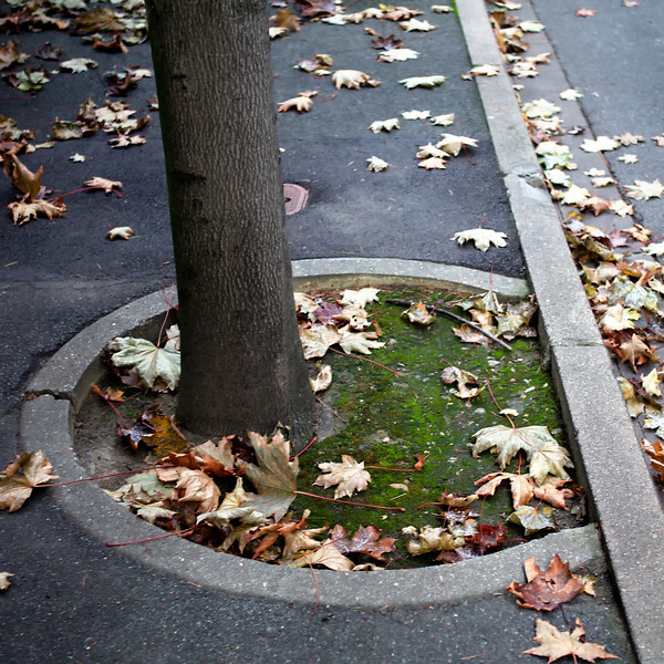 """d"" sidewalk and tree"