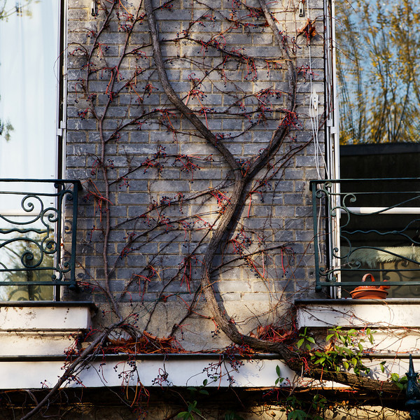 """Y"" vines at a house"