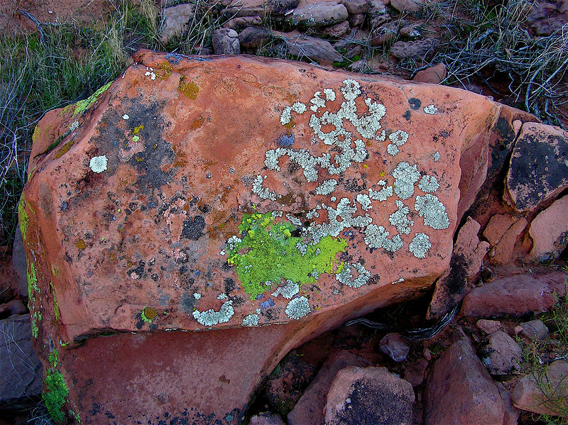 Homage to Marc Chagall. The Russian Goat. Red sandstone boulder with<br /> multicolored lichen. North of Lake Mead. 11/15/2004
