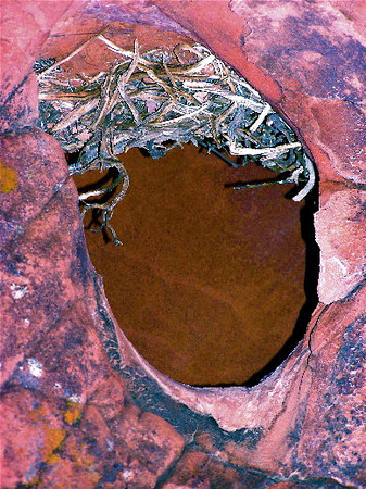 """Crown of Thorns""  A hollow in a red sandstone cave... A bird's nest? Owls, rats or mice?  I flipped it over!"