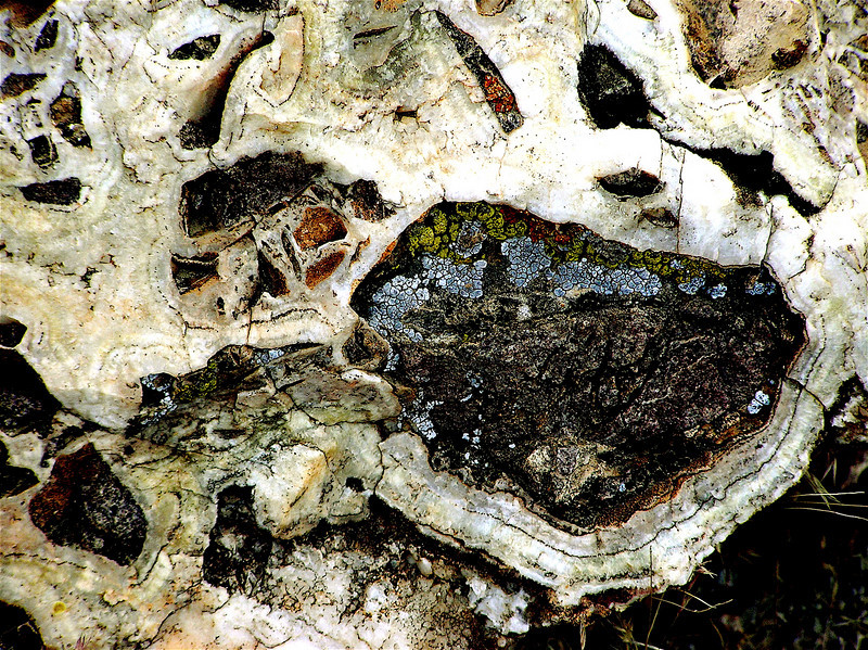 """Petrified Snake"" Gold-bearing Breccia with multicolored Lichen. Nelson,<br /> Nevada. Mohave Desert. 2005"