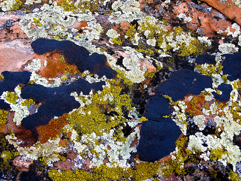 """Homage to  Wassily Kandinsky."" Colorful Lichen on Red Sandstone. After<br /> rain. North of Lake Mead. Nevada<br /> More on Kandinsky, credited as painting the first abstract ,here: <a href=""http://en.wikipedia.org/wiki/Wassily_Kandinsky"">http://en.wikipedia.org/wiki/Wassily_Kandinsky</a>"