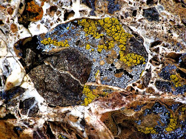 """Pointillism' - ""Homage to Seurat and Signac"".<br /> ""Homage to Seurat and Signac"".  Gold and silver bearing breccia near the Techatchicup Mine, Nelson, Nevada.  Surface covered with multicolored lichen; note the white fine-grained quartz veinlets.""<br /> Paul Signac (November 11, 1863 – August 15, 1935) was a French neo-impressionist painter who, working with Georges Seurat, helped develop the pointillist style. Read more here: <a href=""http://en.wikipedia.org/wiki/Paul_Signac"">http://en.wikipedia.org/wiki/Paul_Signac</a>"