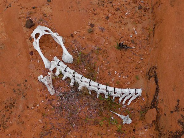 """Homage to Georgia O'Keefe! """"FRAGMENTS OF A HUMBLE LIFE"""" Bones, gravel. On red sandstone. Mohave desert. Nevada."""