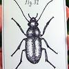 Beetle.  Pen.