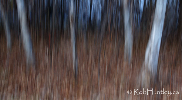 Streaky Trees. Vertical panning of trees at slow shutter speed.  © Rob Huntley