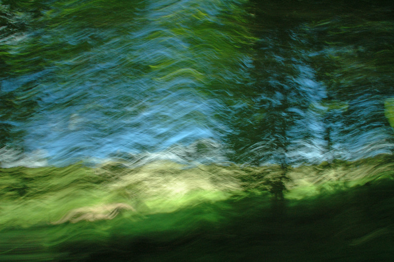 Driveby past trees