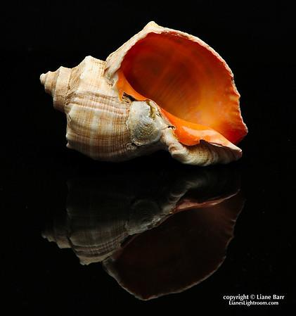Shell Reflections.  (Still life photography)