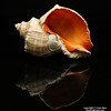 Shell Reflections.  (Still life photography)